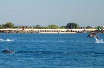 I delfini a Ostia, foto di Daniela Taliana